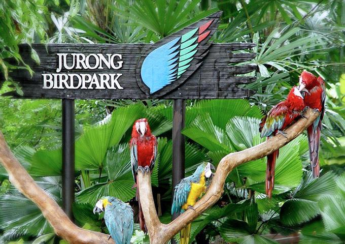 Vé máy bay đi Singapore khám phá Animal & Bird Encounters, Sentosa