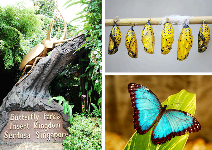 Vé máy bay đi Singapore tham quan công viên bướm và vương quốc côn trùng (Butterfly Park & Insect Kingdom), Sentosa