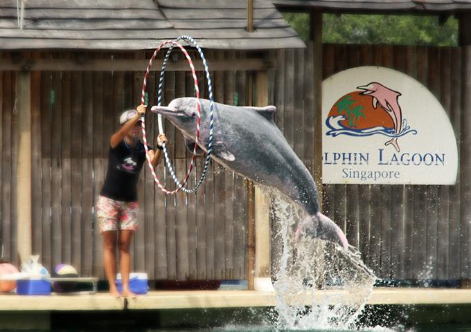 Vé máy bay đi Singapore khám phá hồ cá heo hồng Dolphin Lagoon, Sentosa