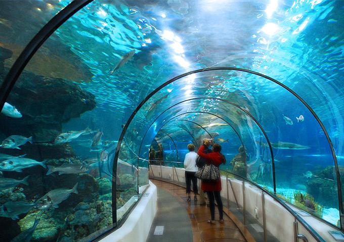 Vé máy bay đi Singapore khám phá Underwater World, Sentosa